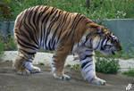 Ursus tigris altaica