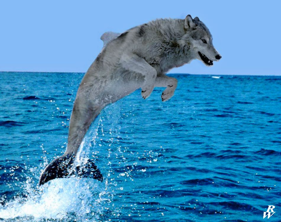 the sea wolf The the sea-wolf community note includes chapter-by-chapter summary and analysis, character list, theme list, historical context, author biography and quizzes written.