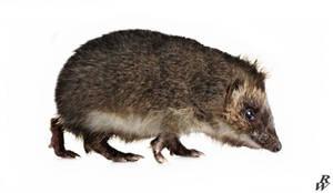 Mousehog