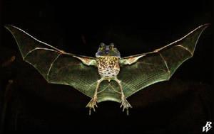 Flying frog by Dwarf4r