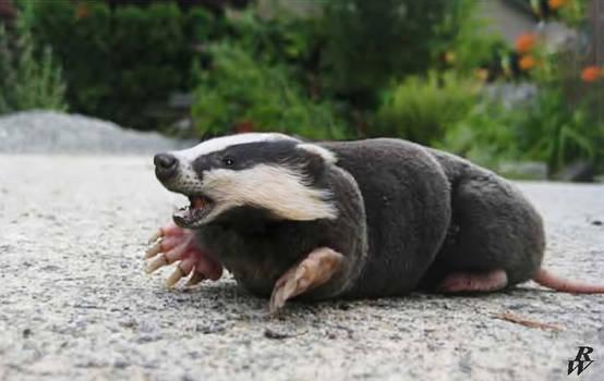 Badger mole