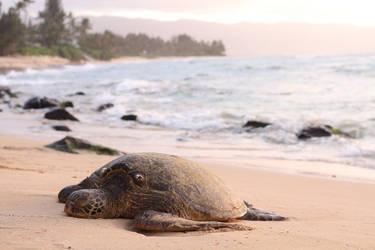 Anouk Govil - turtle by anoukgovil