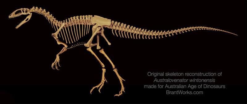 Australovenator Wintonensis Skeleton by 2195Razielim
