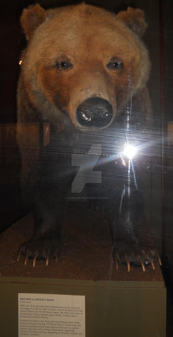 Bear dating in Perth