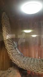 Pigmy Western Bearded Dragon 1