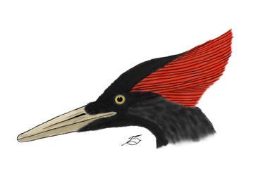 Inktober Day 7 Extinct birds
