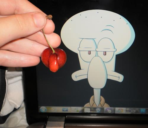 Squidward Cherry By Manicfool On DeviantArt