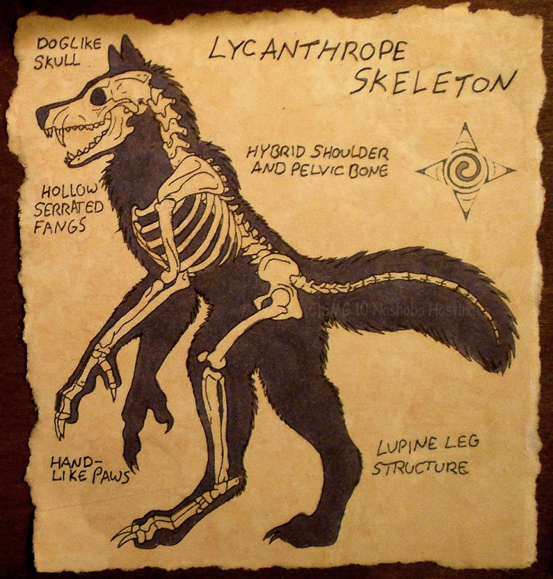 Lycanthrope Skeleton