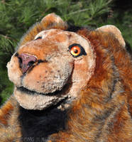 Lion's Face by Nashoba-Hostina