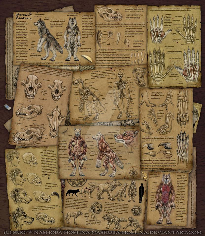 Werewolf Anatomy