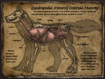 Quadrapedal Werewolf Internal Anatomy