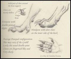 Grahll Paw study by Nashoba-Hostina