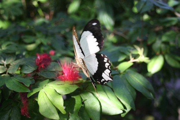 Butterfly 4 by Kalyandra