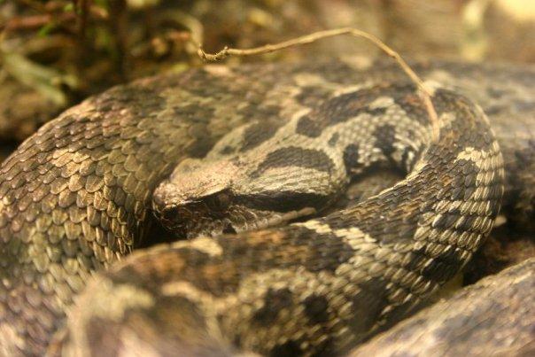 Snake 1 by Kalyandra