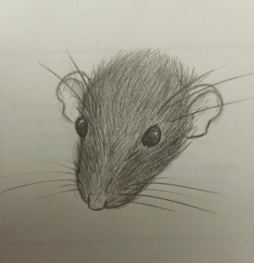 rat face by Kalyandra