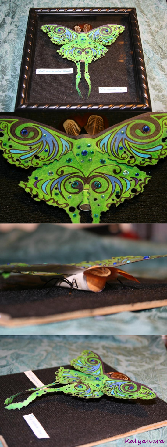 Luna moth compilation by Kalyandra