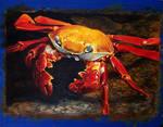 Sally Lightfoot Crab Painting