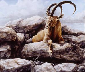 Ibex - Oil painting by stevegoad