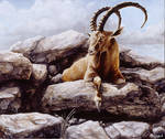 Ibex - Oil painting