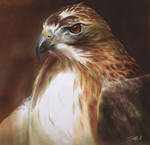 Red-Tailed Hawk Oil Painting
