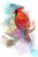 Cardinal Portrait by stevegoad