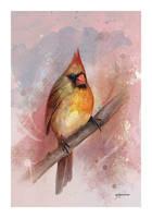 Female Cardinal by stevegoad