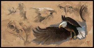 Bald Eagle Study Sheet