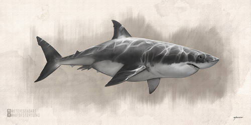 Great White Shark Drawing by stevegoad