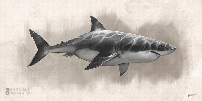 Great White Shark Drawing by stevegoad