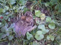 Bunny On The Ground by Ardonenher