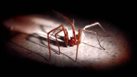 Large spider under the closet