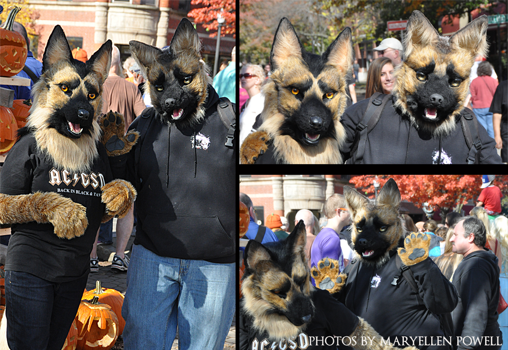 Sheppies at Keene Pumpkin Fest by Katmomma