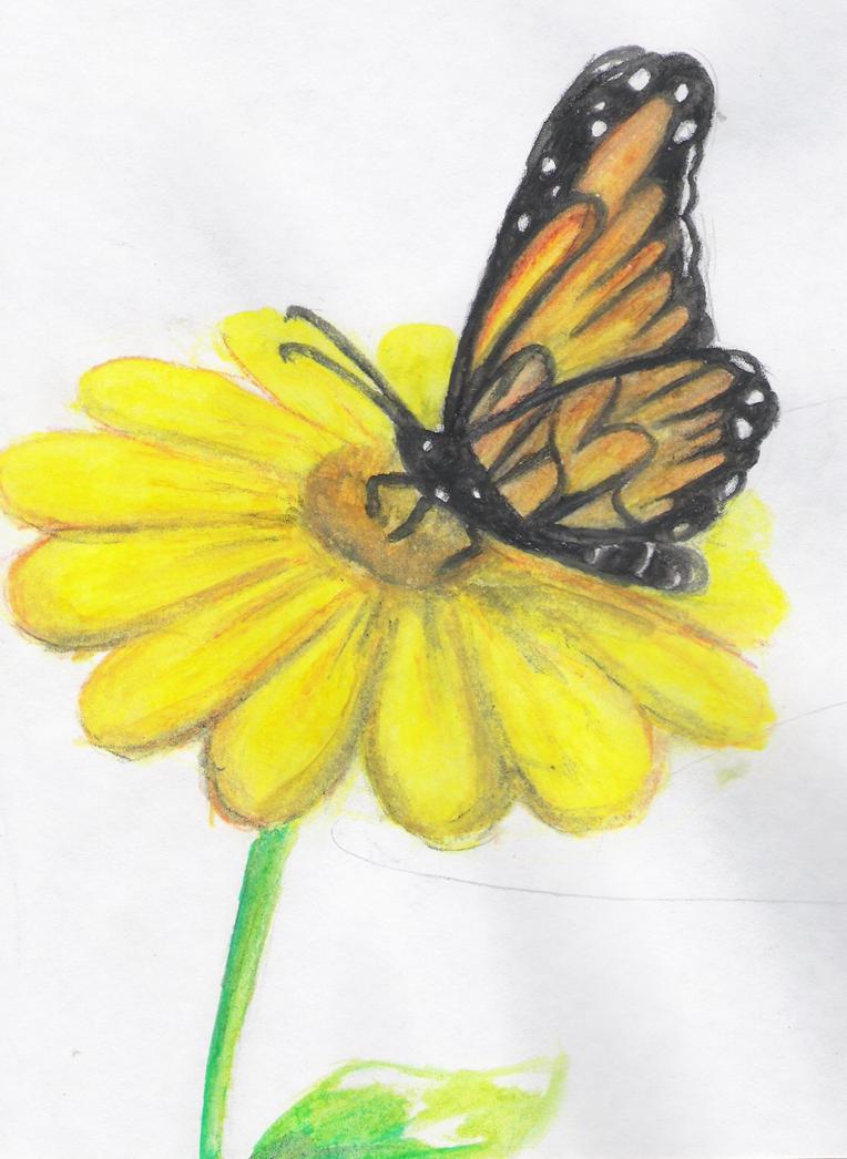 butterfly on a flower by roman94 on deviantart