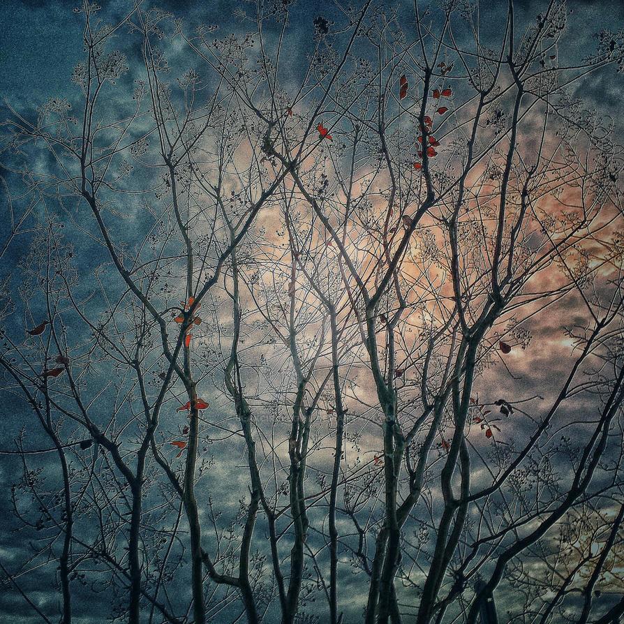 Spooky Trees by blakcirclegirl