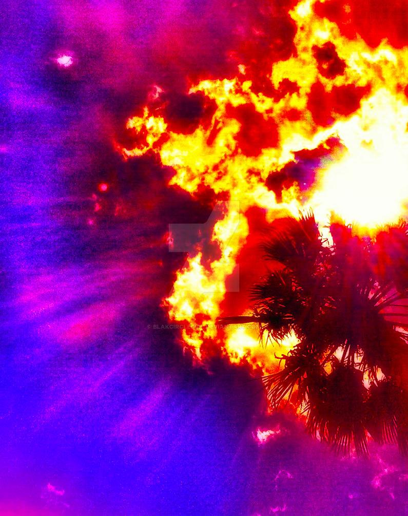 Palm Tree Sunburst by blakcirclegirl