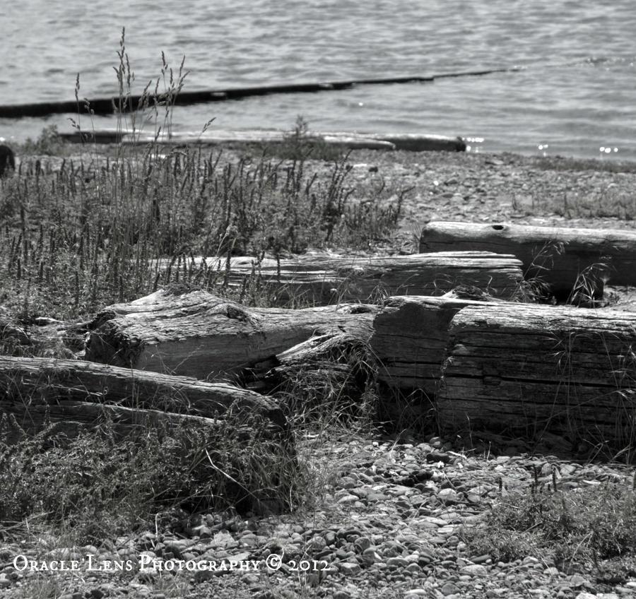 Drift Wood by phaetalon