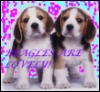 Beagles icon by wednesday-sol