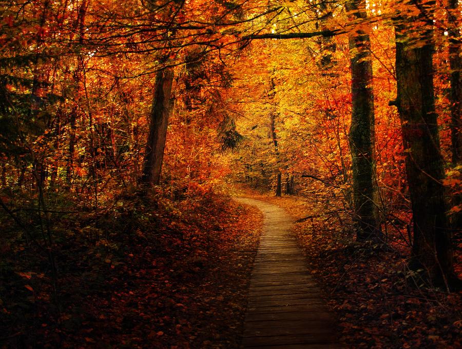 Autumn Forest Trail - Premade BG by Emerald-Depths