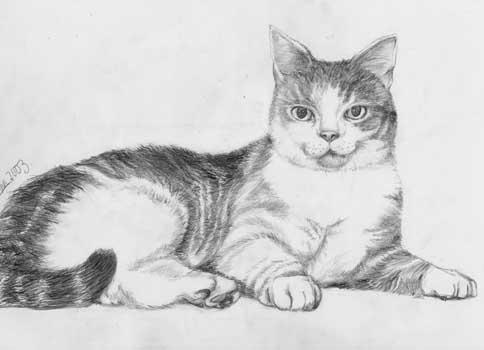 still life drawing. Still life drawing of a cat