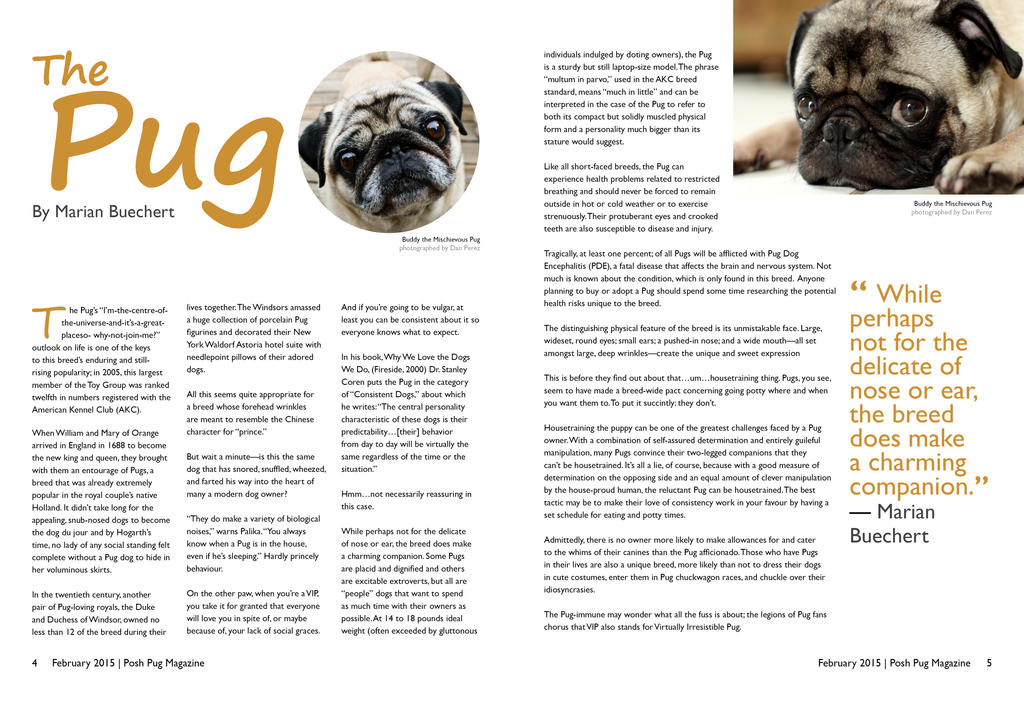 Posh Pug Magazine Text Based Article Spread by denzel94