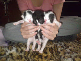 all 3 of the kittens :) by BlondyKay