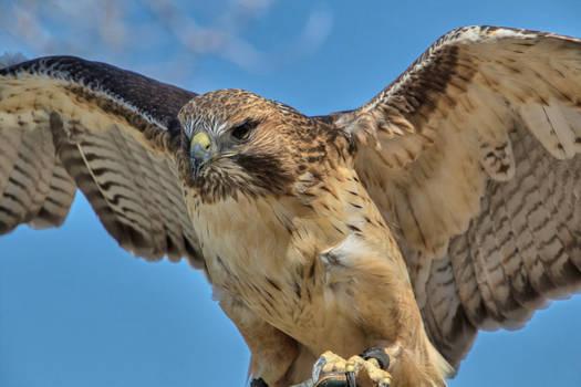 Wings of Enlightened
