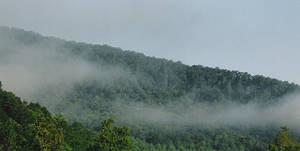 Tennesese Fog