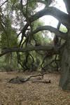 Stock - Dark Tree