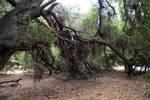 Stock - Tree Stock