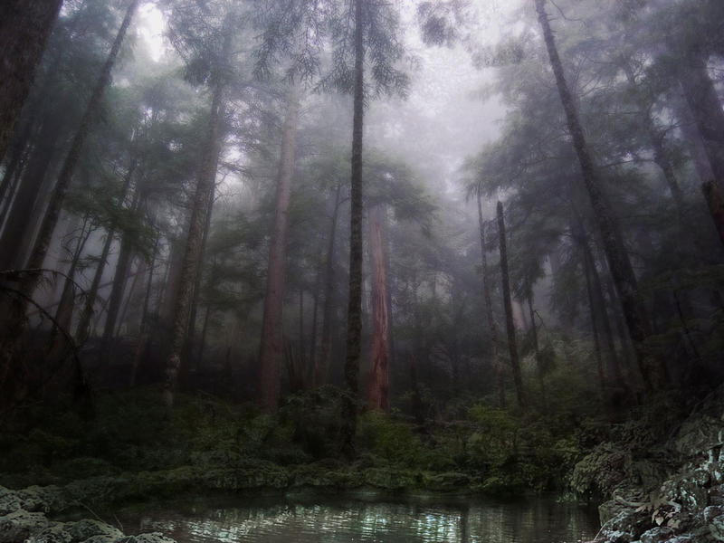 Deep in the Forest Phatpuppy_Deep_in_the_Forest_by_phatpuppy