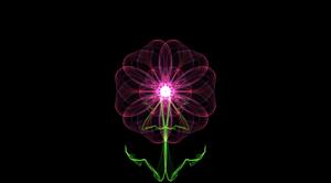 Floral Web