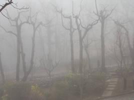 Fog by Altair-E-Stock