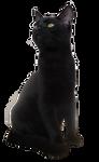 Cat 01 - PNG