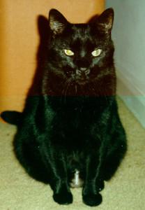 Pugio-Signifer's Profile Picture